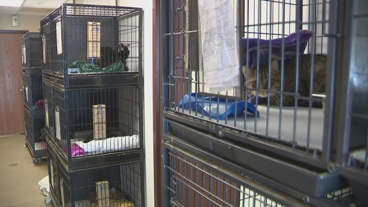 Scott County Humane Society reaching full capacity, encourages adoption