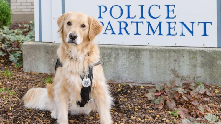 Can Sterling's most popular pup beat other K9s across the US?