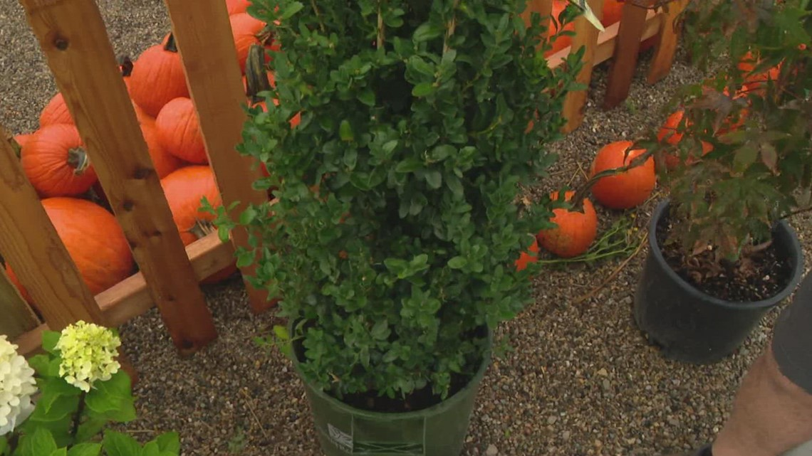 Pat Sullivan: Caring for outdoor plants in fall