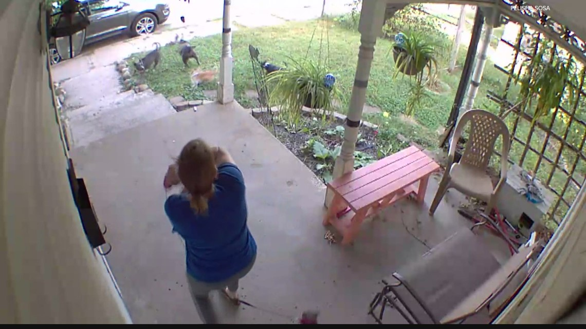 13Investigates: Residents say they're being terrorized by vicious dogs