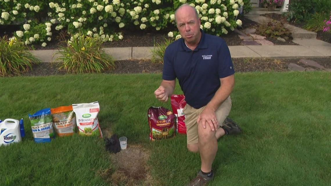 Pat Sullivan: Late summer lawn care