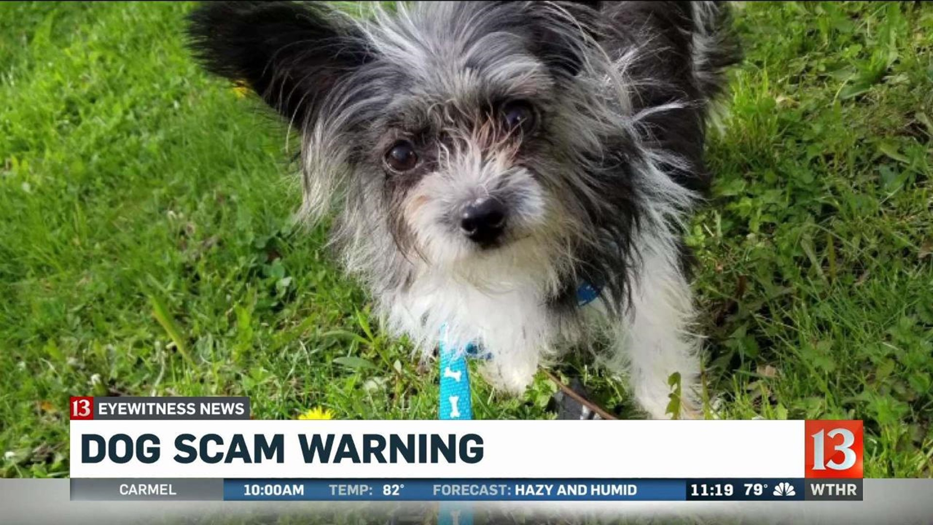 Woman Says She Was Scammed By Woman Selling Dog On Craigslist Wthr Com Ebay and other american websites, rate is $1/370. dog scam warning