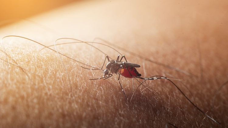 Tippecanoe County mosquitos test positive for West Nile virus