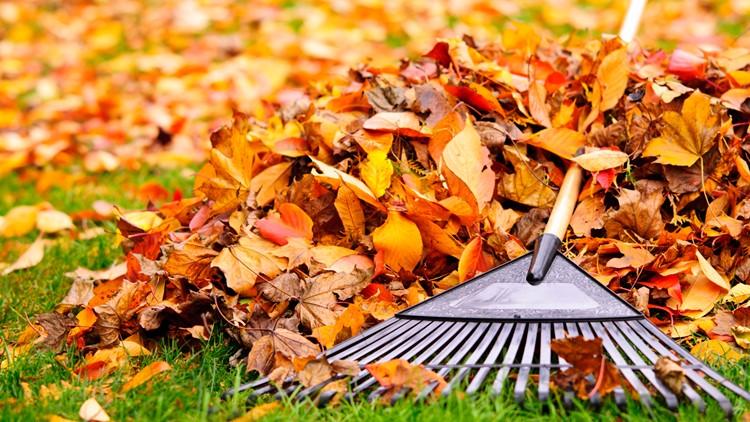 Don't rake those leaves this fall!