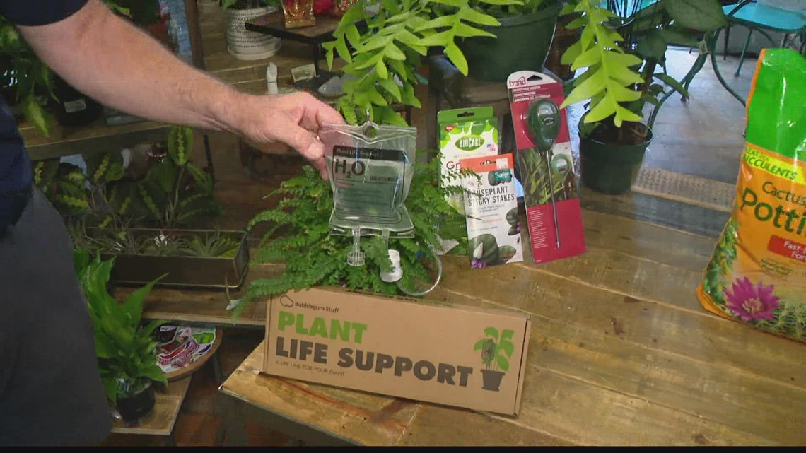Pat Sullivan: Bringing outdoor plants indoors for the winter