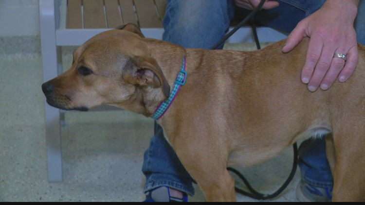 IndyHumane raises thousands of dollars to get special surgery for dog
