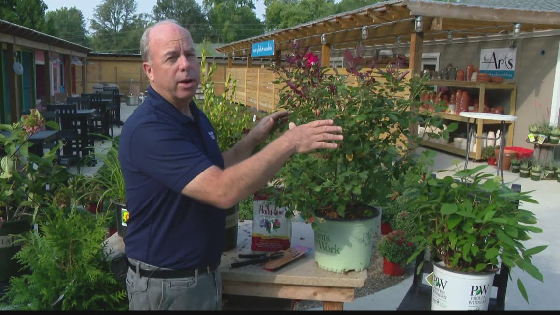 Pat Sullivan on planting and pruning bushes in fall