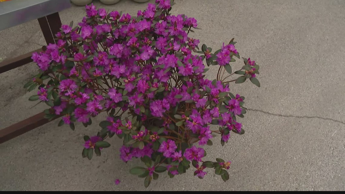 Pat Sullivan: Plants and bushes for spring