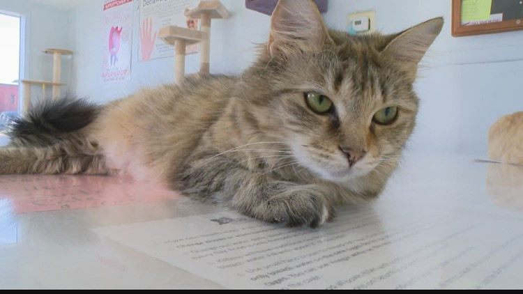 13 to the Rescue: Hancock County Humane Society only takes in cats, runs on volunteers and donations