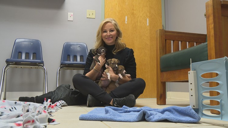 13 to the Rescue: Humane Society for Boone County's cat fostering program thriving