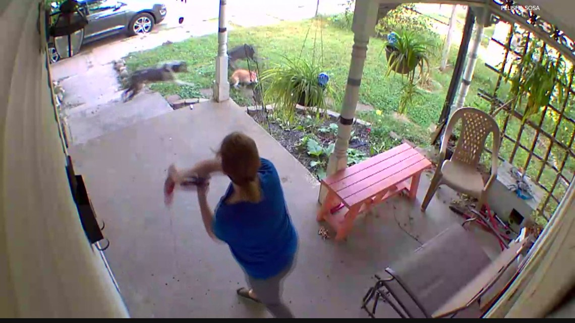 Neighborhood demands action after series of dog attacks