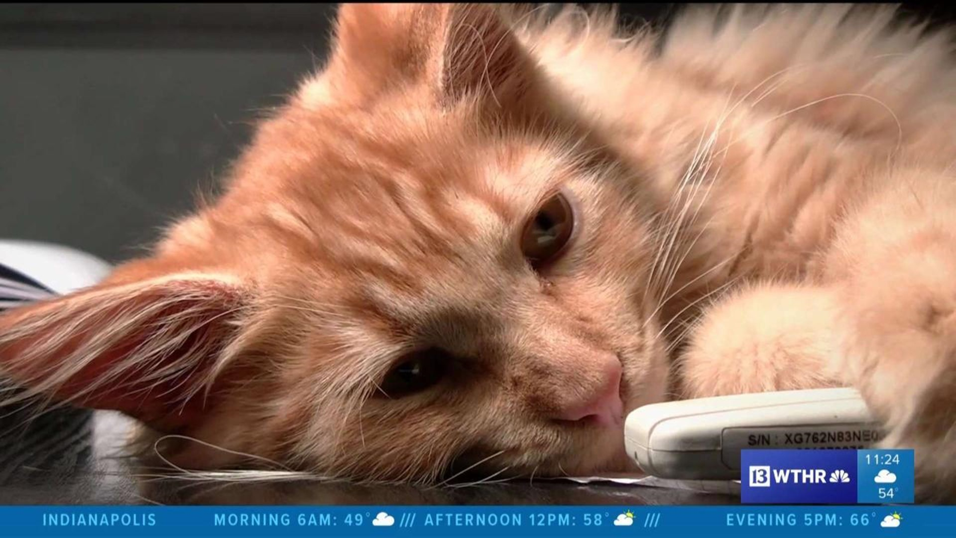 Verify What Does It Mean Now That 2 Cats Have Tested Positive For Covid 19 Wthr Com