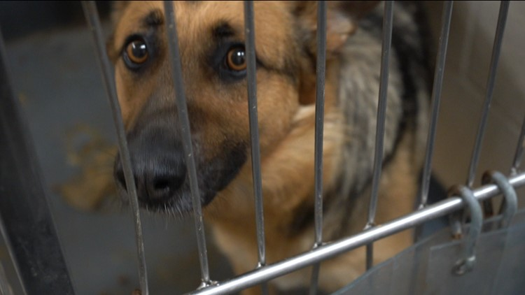 Hundreds of dogs and cats waiting for adoption at Indianapolis animal shelter