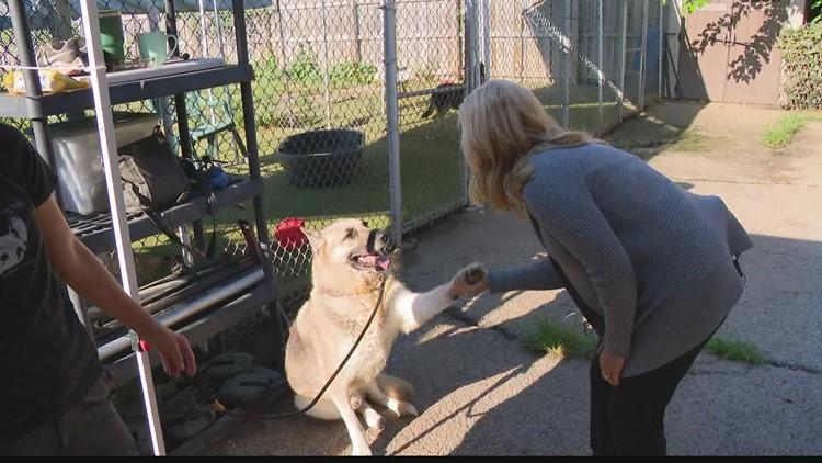 Indianapolis woman starts German shepherd rescue