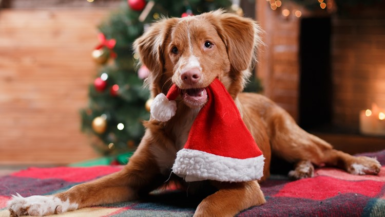 LISTEN: Dog food company creates first ever Christmas song for dogs