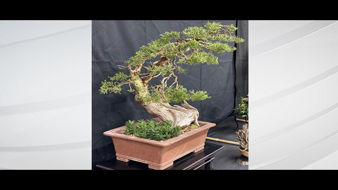 Creating Your Own Bonsai Tree Wthr Com