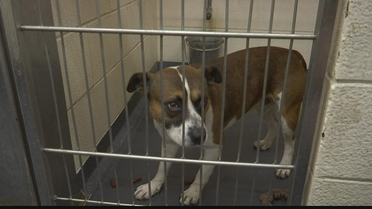 At capacity, Indy shelter expands hours to facilitate more adoptions