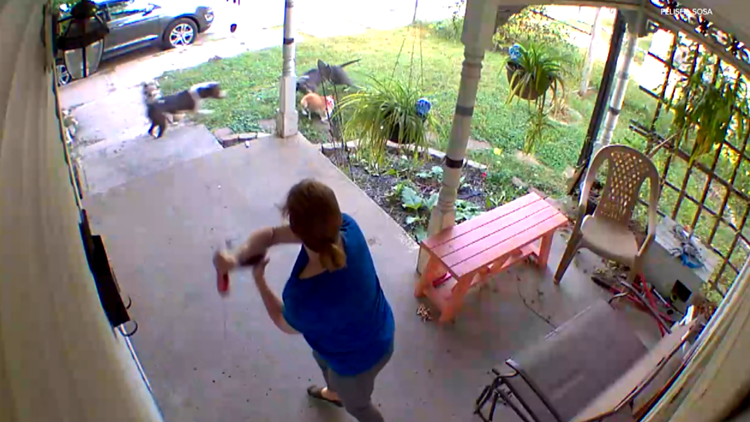 Caught on camera: Indy residents want action after violent dog attacks captured on video
