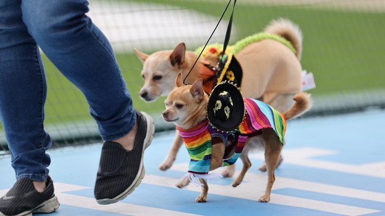 'Mutt Strut' at Victory Field raises over $140,000 for IndyHumane