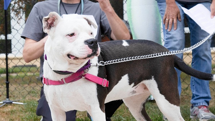 IndyHumane to host Mutt Strut in the fall