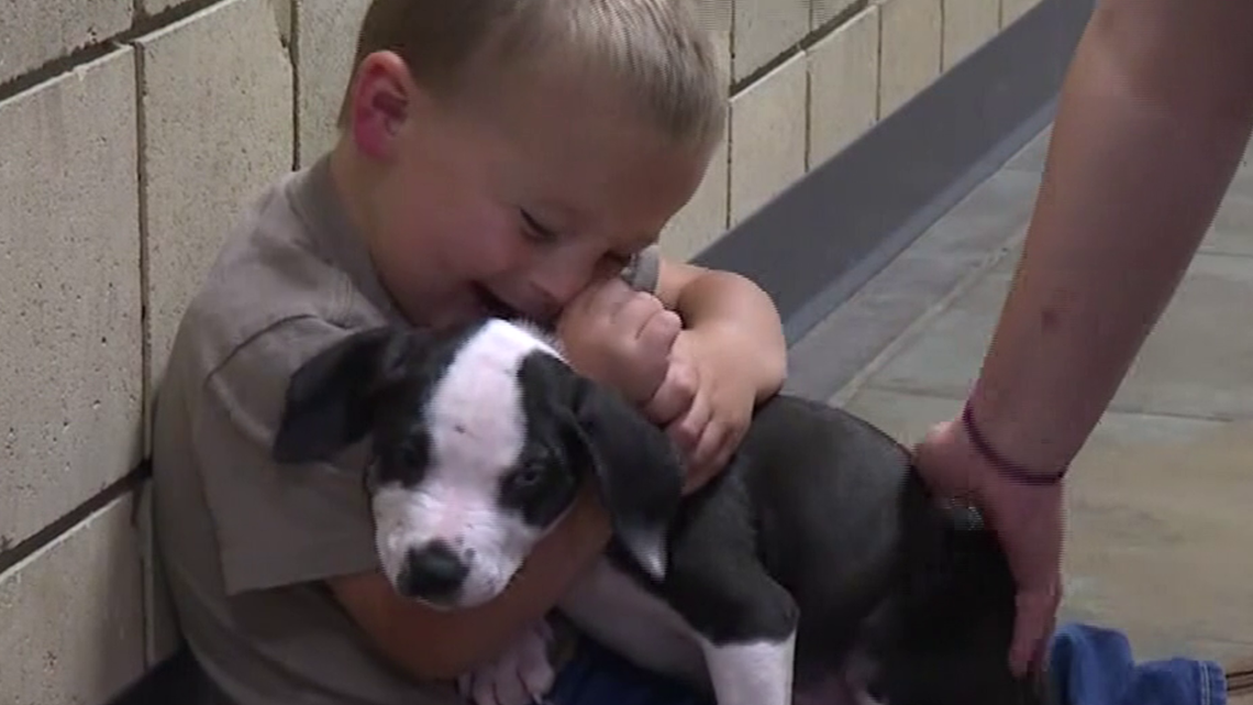 Michigan 2-year-old and adopted puppy bond over shared birth defect