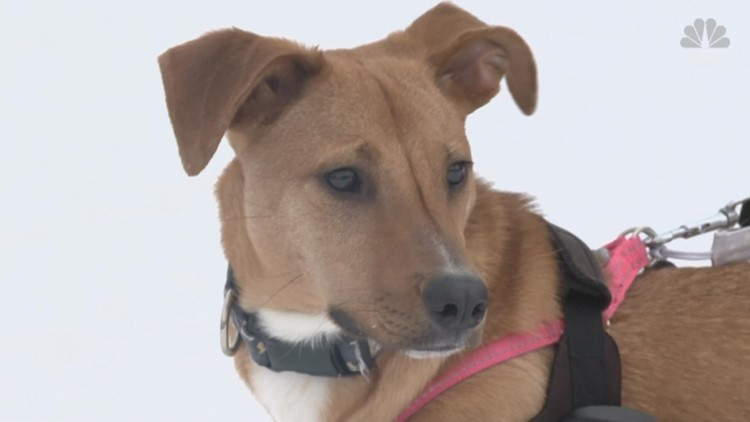Paralyzed dog from Mississippi seeking forever home in Rhode Island