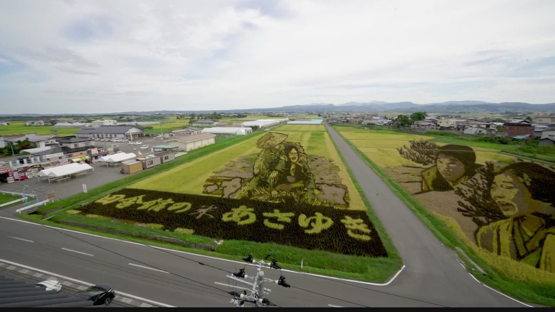 See how Japan's most important crop is also an art canvas