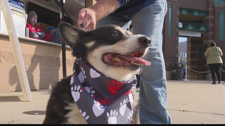 IndyHumane's 'Mutt Strut' held at Victory Field