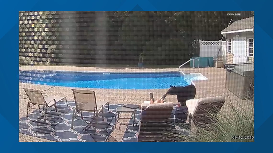 WATCH: Bear walks up to man presumably asleep at backyard pool