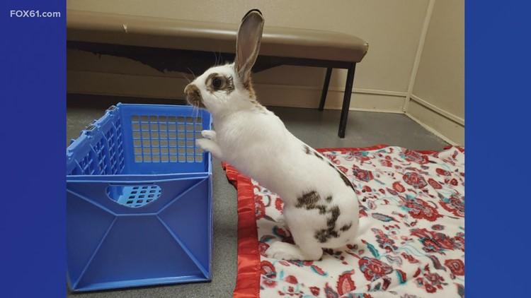 Pet of the Week: Spots the rabbit
