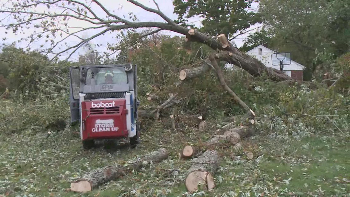 60-foot tree uprooted in Stonington by Nor'easter