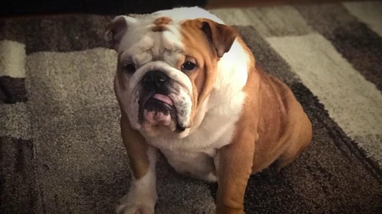 Beloved Puppy Dies After Grooming At Petsmart Fox61 Com