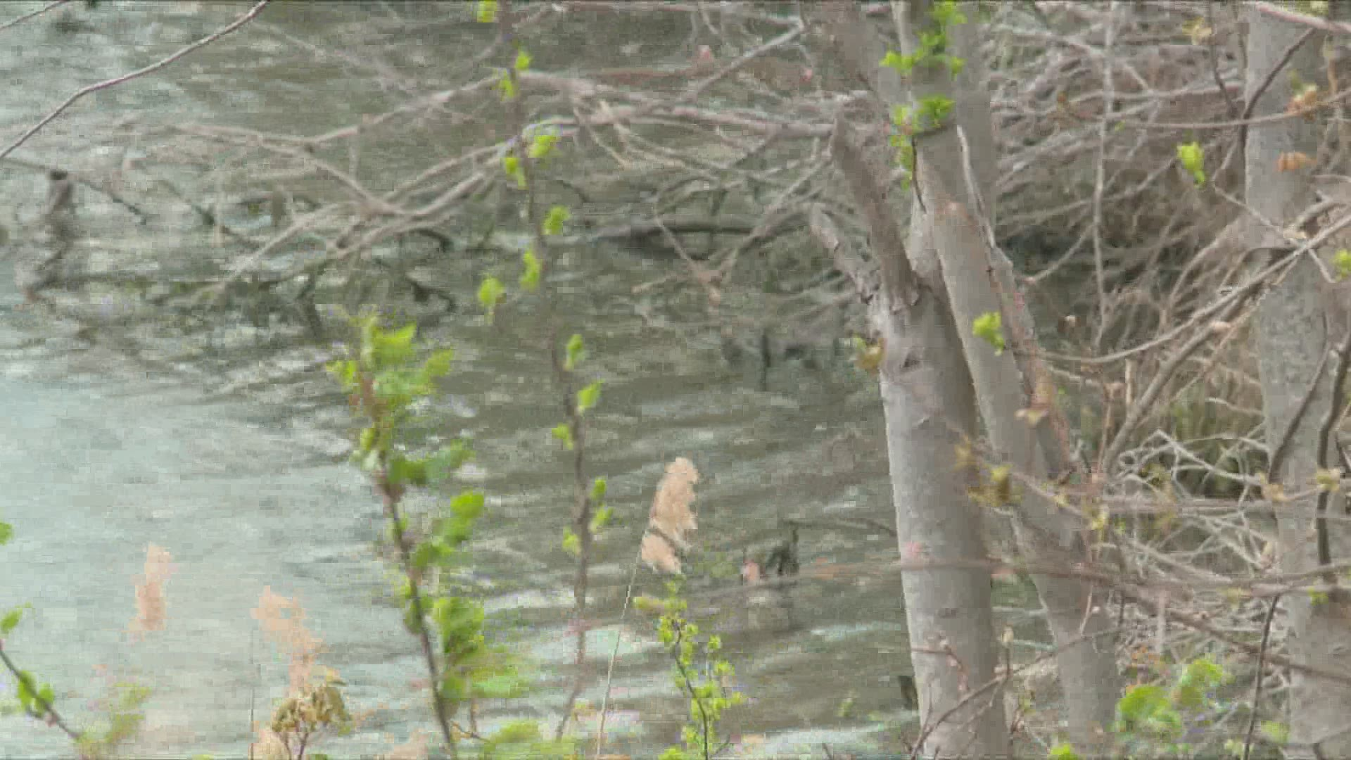 Police Investigating Homicide Of Teenager After His Body Was Found In Wallingford Lake Fox61 Com