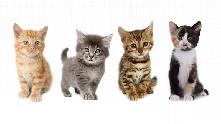 Carolina: Kittens For Sale In Ct Craigslist