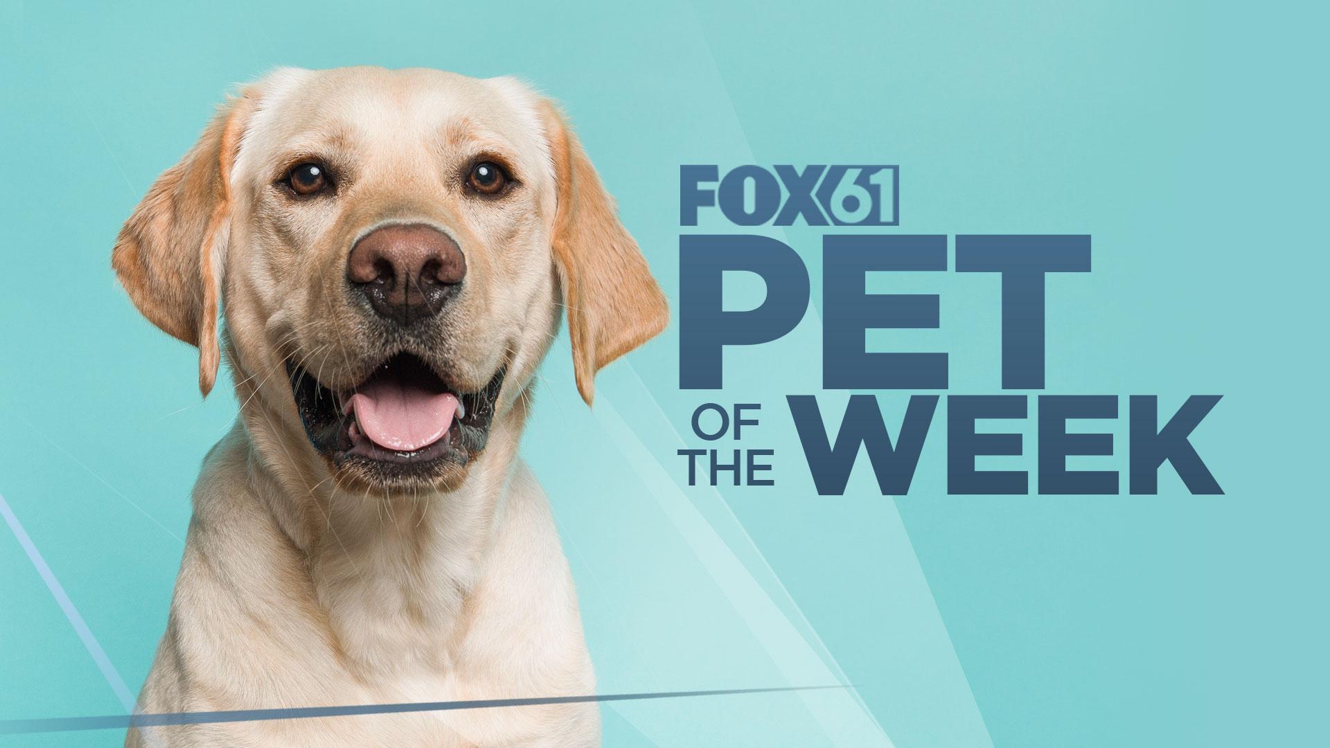 Pet of the Week