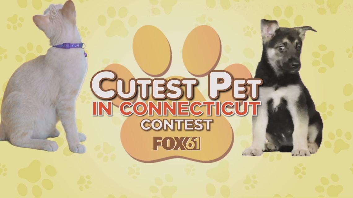 Cutest Pet in Connecticut