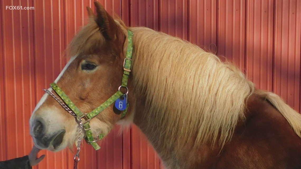 After recovery, neglected horses from Montville going up for adoption