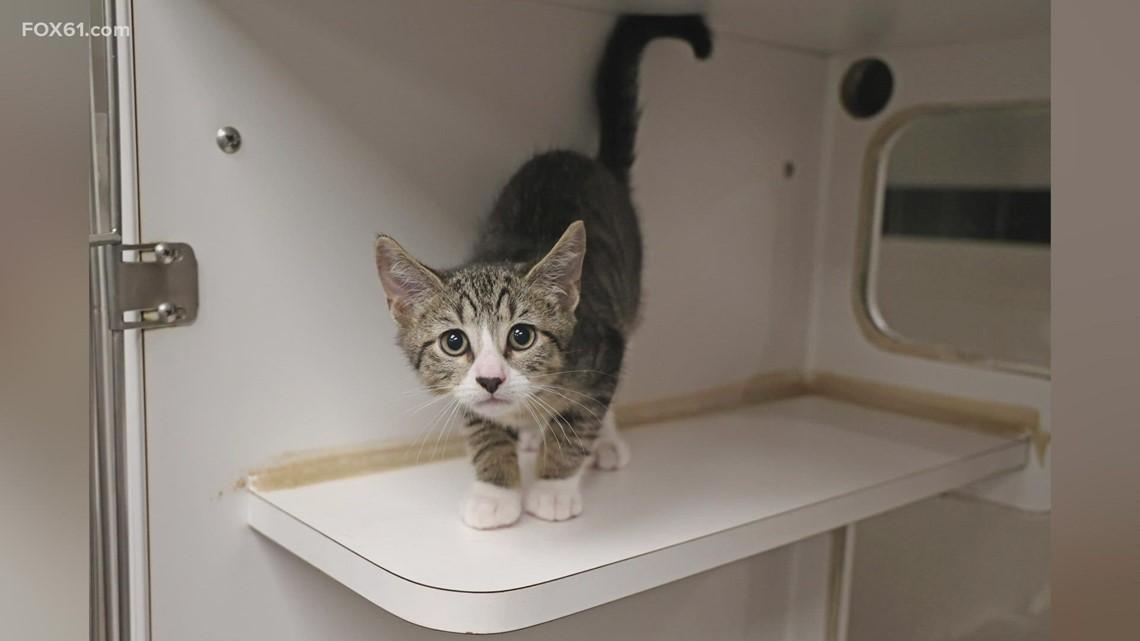 Pet of the Week: Ziggy the kitten