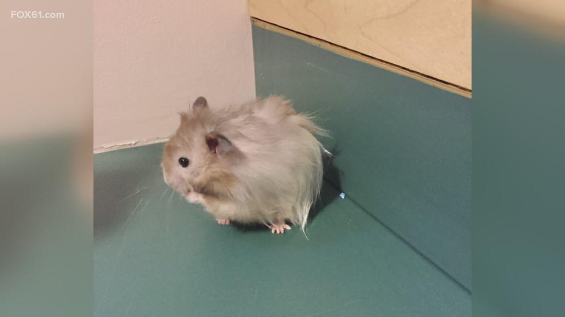 Pet of the Week: Tyson
