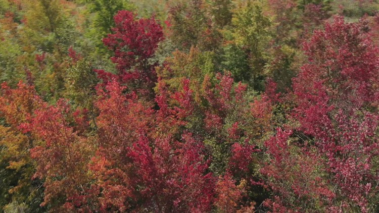 SKY61 over Morris fall foliage