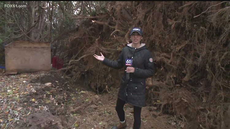 Nor'easter brings down massive tree in Stonington near South Broad Street