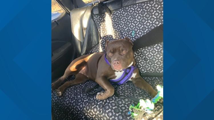 Danbury Police: dog stolen in burglary