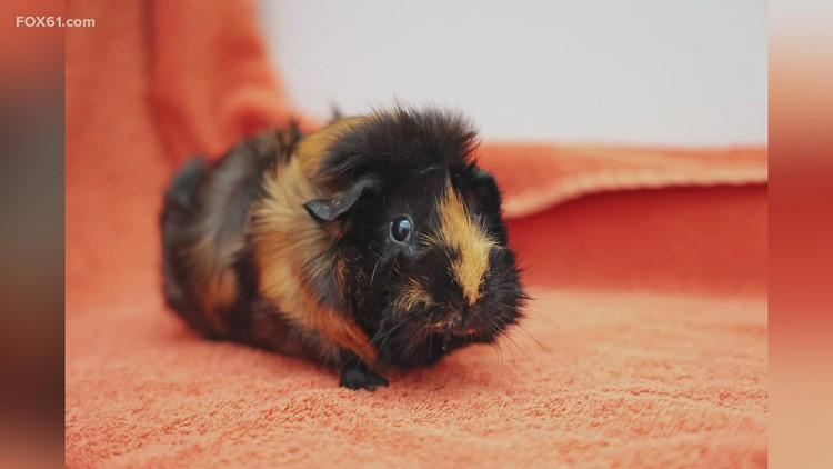 Pet of the Week: Pumpkin and April
