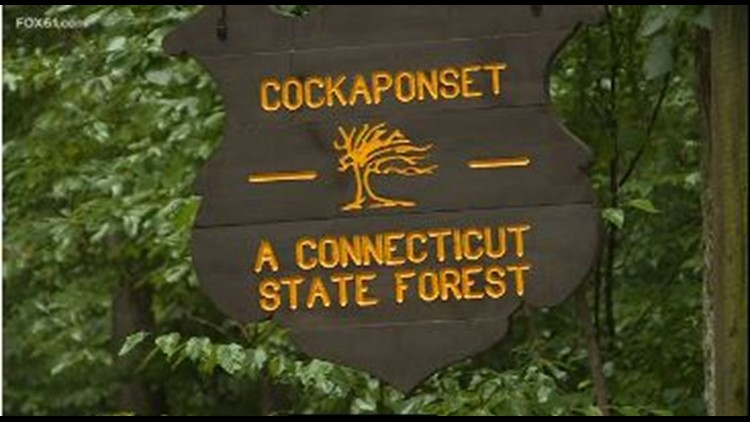 Cockaponset State Forest in Chester reopens after police  investigation