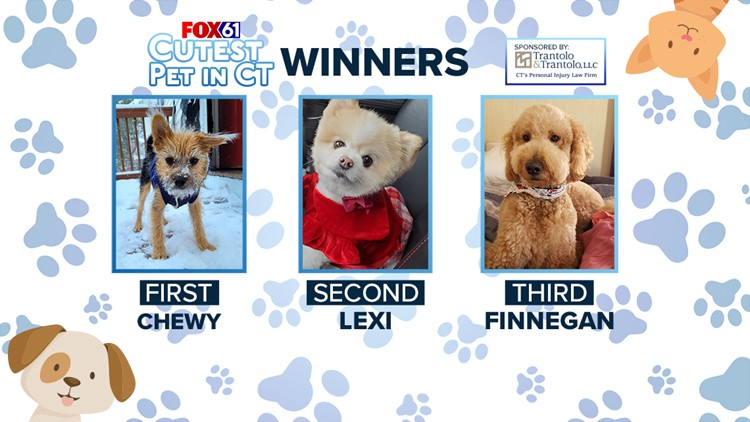 FOX61 Cutest Pet in CT Contest
