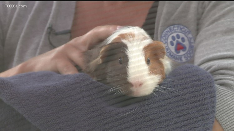 Pet of the Week: S'mores
