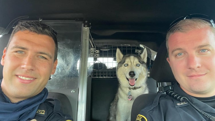Police rescue dog from hot car after owner was killed in shooting