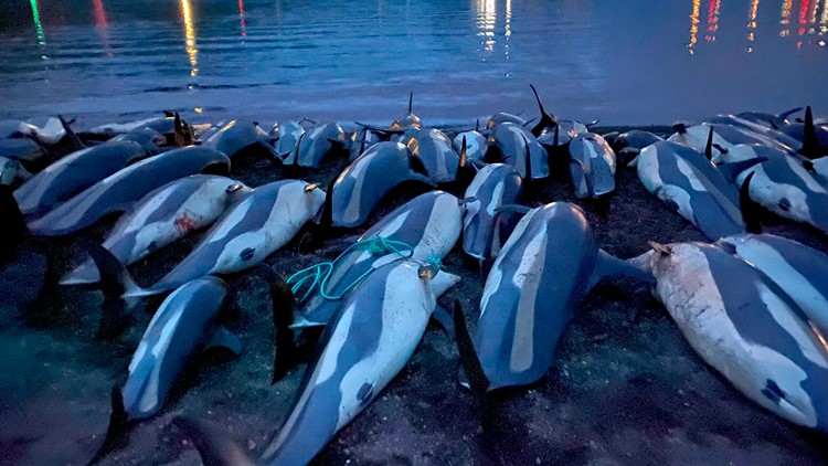 Clearwater Marine Aquarium: Killing of 1,500 white-sided dolphins deemed 'unsustainable'