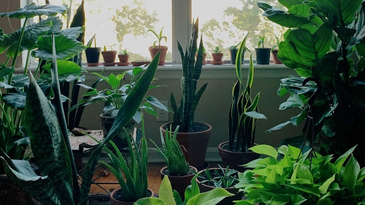 Plant shop owners help plant parents, new and old, keep their greenery thriving