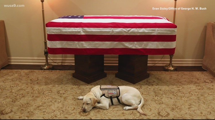 President George HW Bush's former service dog Sully honored with hometown statue | Get Uplifted